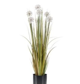 Emerald Eternal Green Dandelion grass 83cm autumn