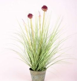 Emerald Eternal Green Allium grass flowers 53cm It purple in zink pot