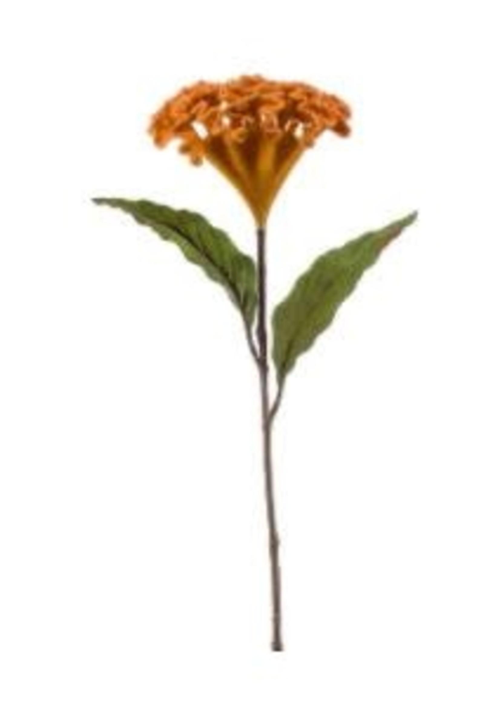 Emerald Eternal Green Celosia spray velvet ochre 62cm