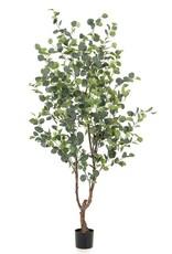Emerald Eternal Green Eucalyptus tree 180 cm
