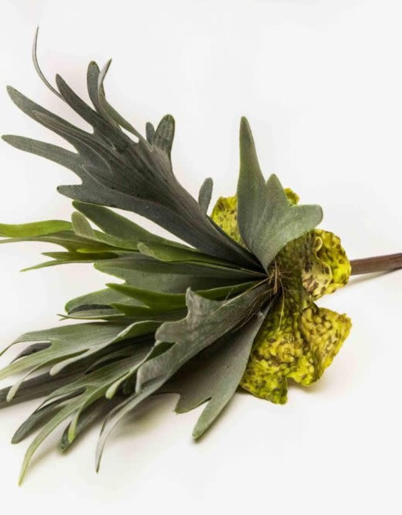 Zijde Platycerium 27cm groen