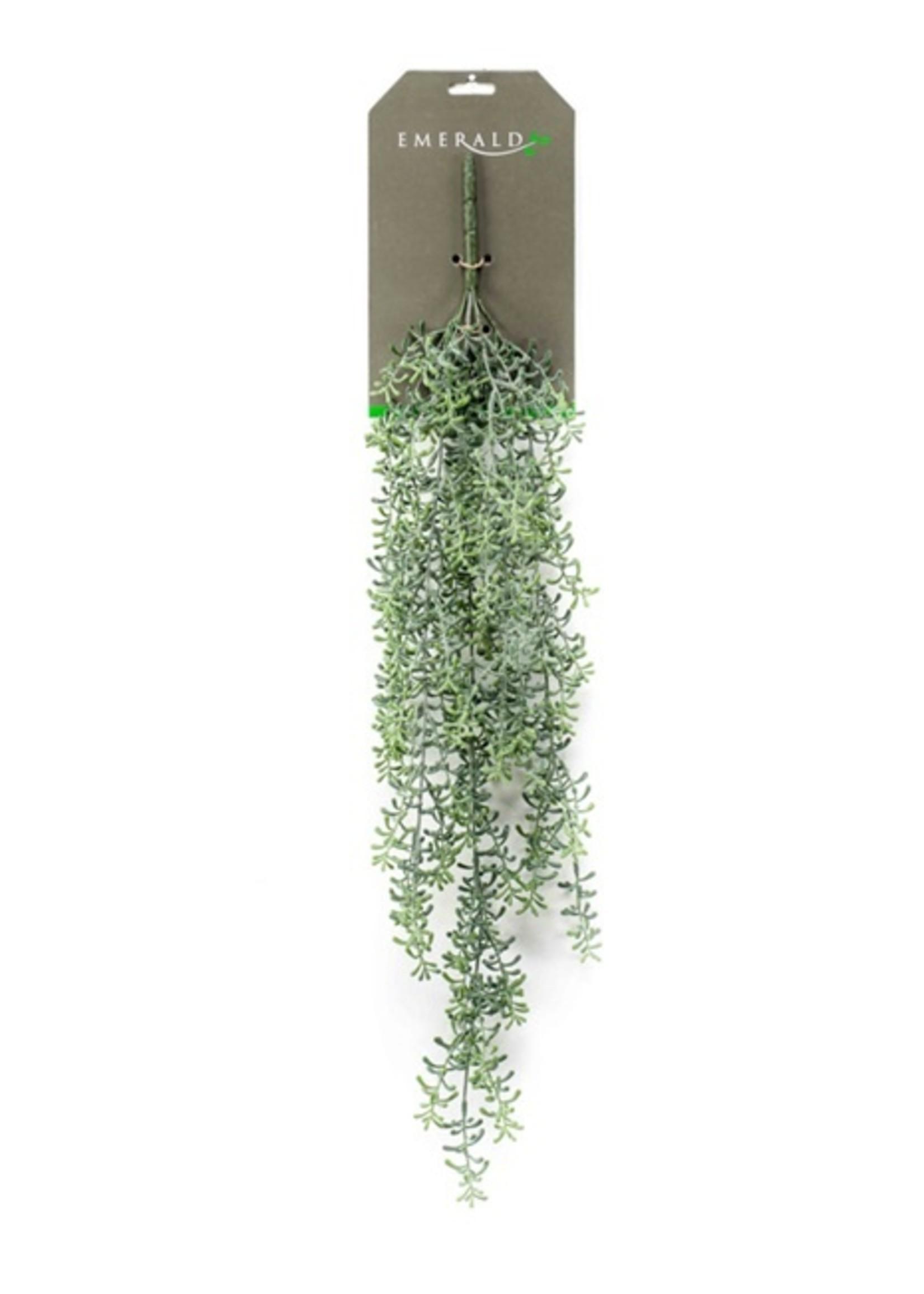 Emerald Eternal Green Rhipsalis hanging bush x5 72cm