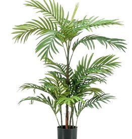 Emerald Eternal Green Phoenix palm 90cm