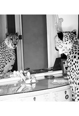MondiArt Cheetah looking in mirror