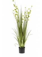 Emerald Eternal Green Grass pompom 85cm lt green in pot