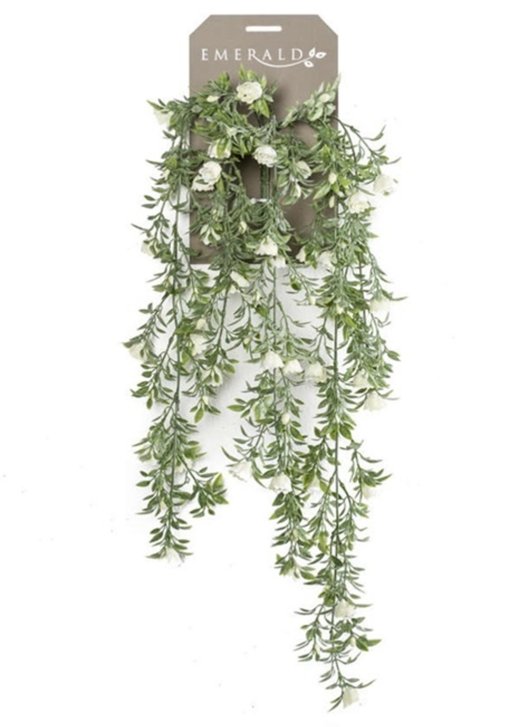 Emerald Eternal Green Rose mini hanging bush x5 75cm cream