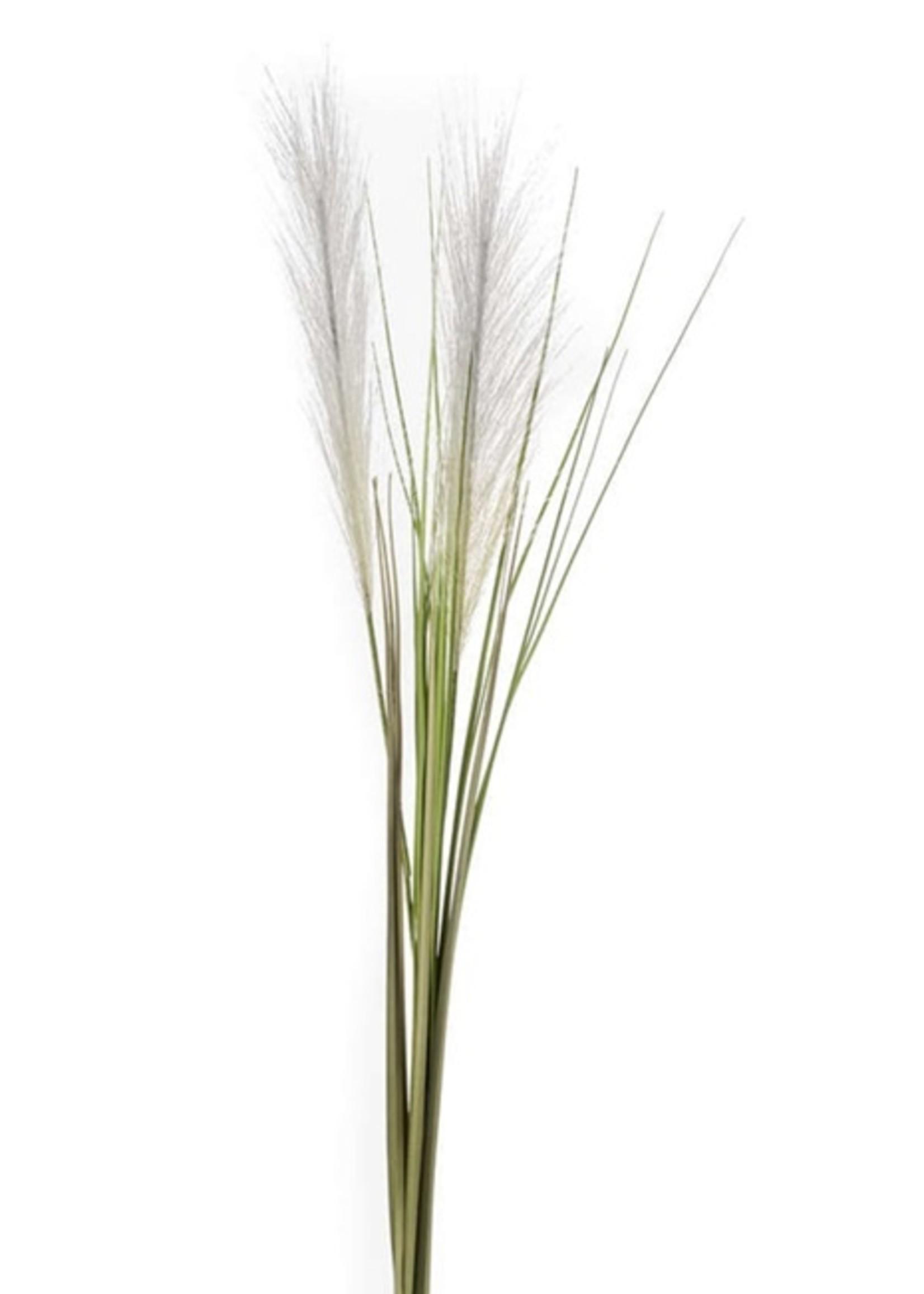 Emerald Eternal Green Cortaderia grass x2 95cm cream
