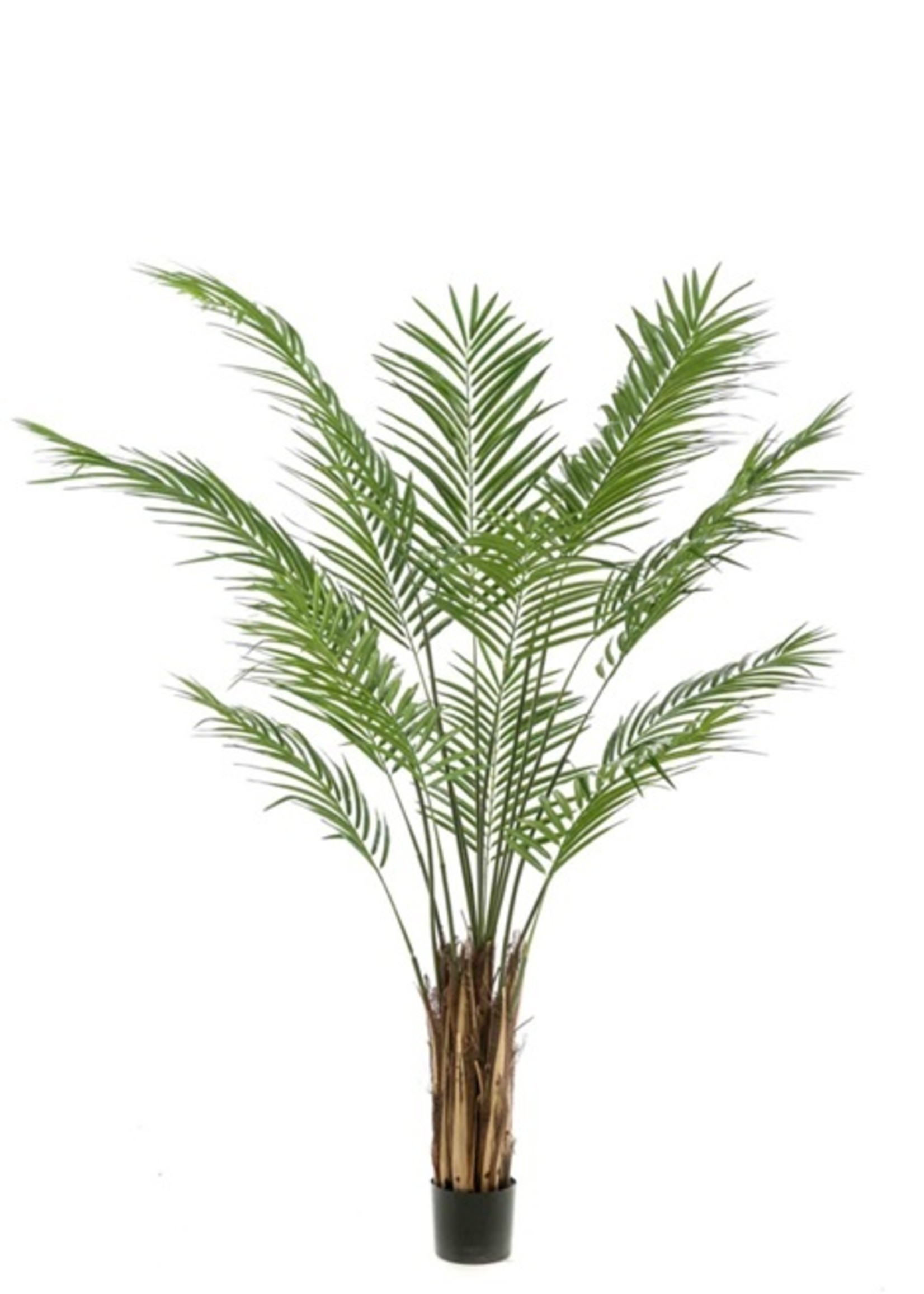 Emerald Eternal Green Areca palm 180cm