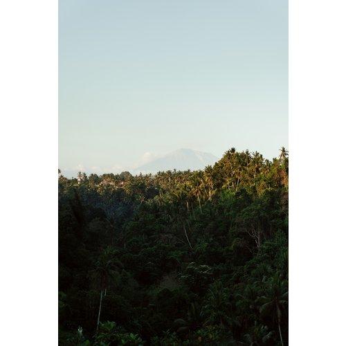 JDD Tropical I