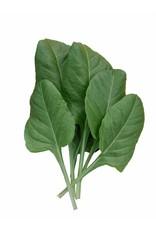 Snijbiet Gewone Groene gladbladerige bladgroente
