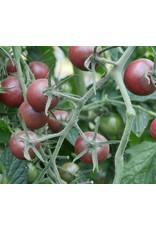 Tomaat Black Cherry
