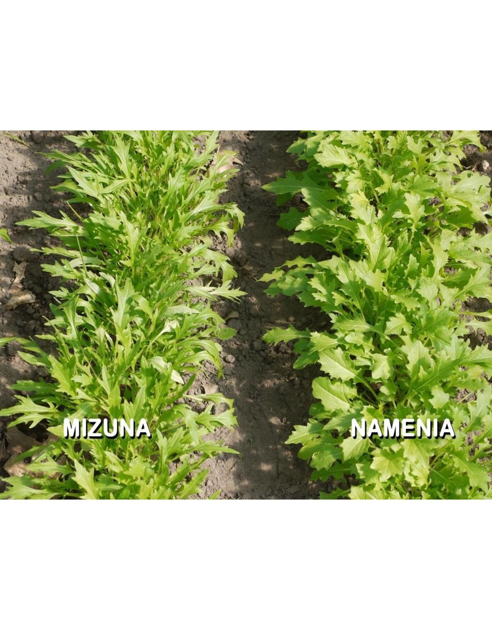 Bladgroenten Namenia - Brassica rapa subsp. campestris