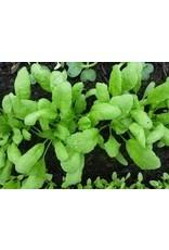 Bladgroenten Turkse grootbladige tuinkers - Lepidium sativum-