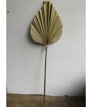Palm leaf small