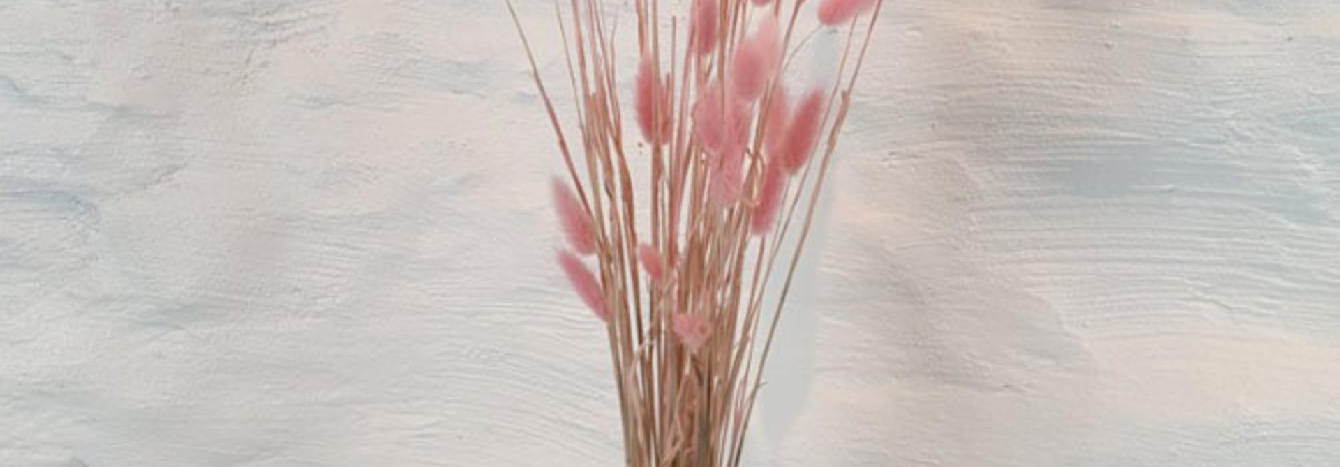 Lagurus dryflower Powder Rose