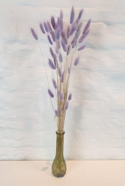 Lagurus dryflower Lila