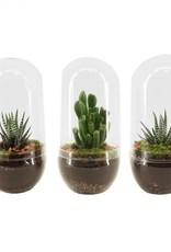 Plants Terrarium