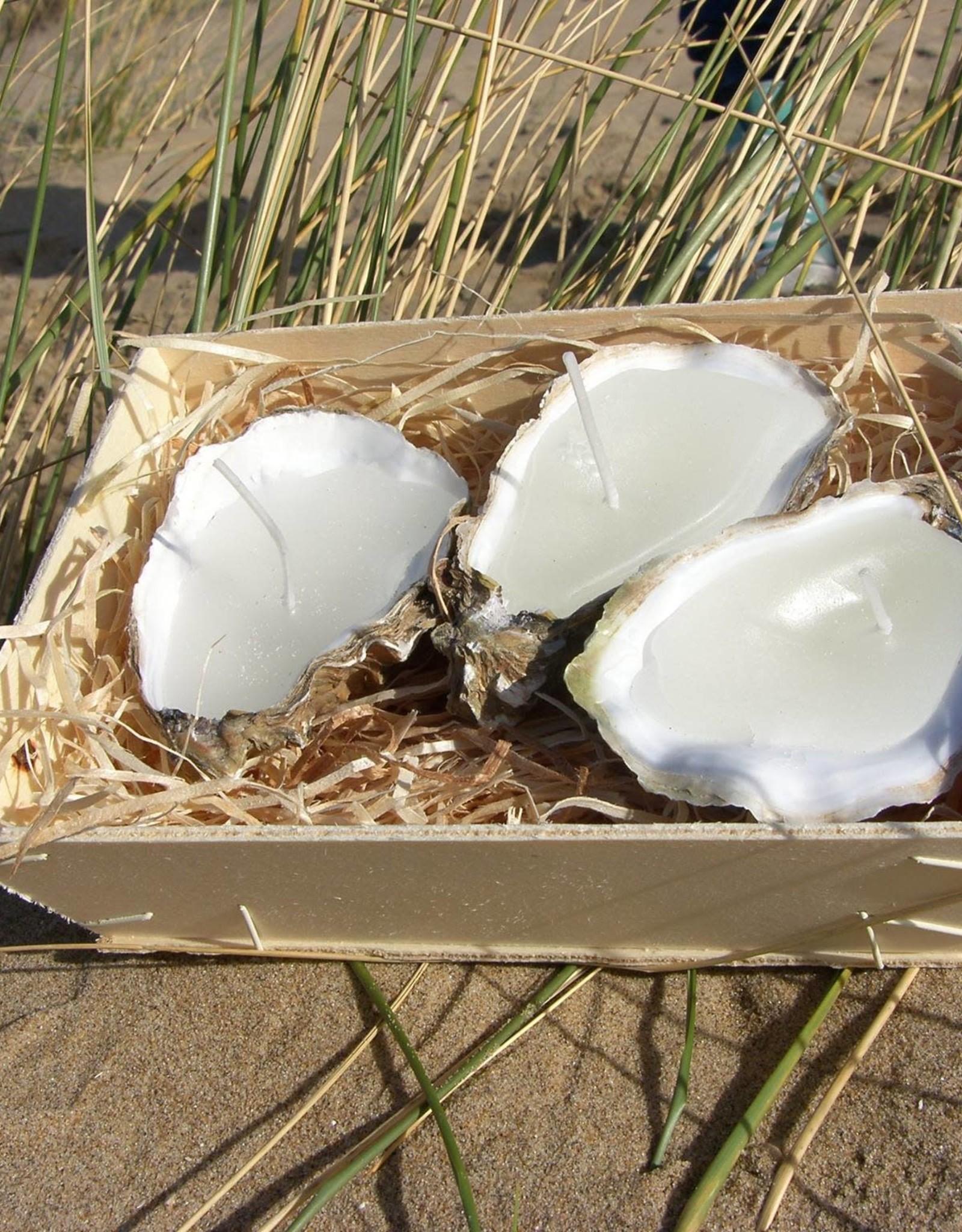 Oyster Candle Medium 3 Pcs