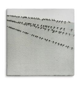 Storytiles Tegel - Vogels in een rij