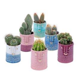 Plantophile Bloempot + Cactus | Gezicht | Groot