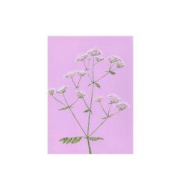 stengun drawings Wenskaart - Cow Parsley - Dubbele kaart + Envelope - 10 x 15cm
