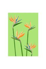 stengun drawings Wenskaart - Birds of paradise - Dubbele kaart + Envelope - 10 x 15cm