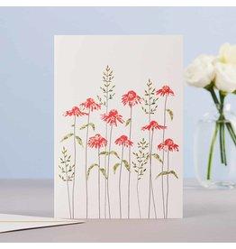 Eloise Hall Wenskaart - Echiancea  & grass  - Dubbele Kaart + Envelop - 11,5 x 16,5 - Blanco