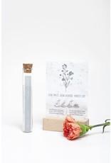 Kop op! 100 Geluksmomenten - Plant je droom - Buisje met groeipapier met daarin 100 kleine blijmakers ( Zaadjes) - Vergeet me nietjes