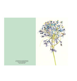 Ping He Art Wenskaart - Scillaperuviana - Dubbele kaart + enveloppe - A6