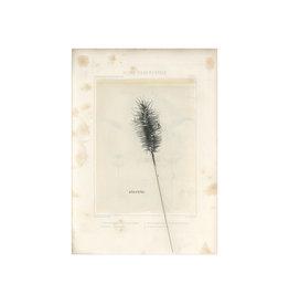 Nakke Van Loo Wenskaart - Flore Ornemental, Sterkte- Postkaart + Melkomslag