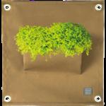 The green pockets The Green Pocket Amma