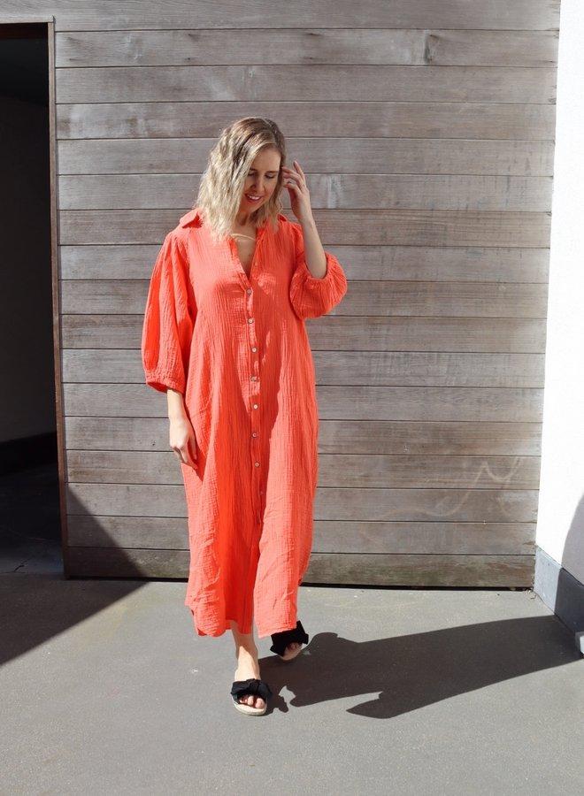 Tetra Naomi orange