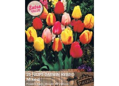 Tulpen   Vanaf half augutus weer beschikbaar