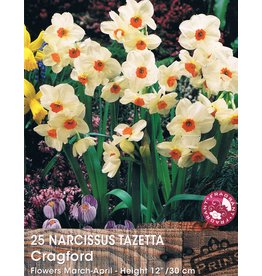 Hollands geteeld Narcis Cragford