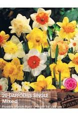 Hollands geteeld Narcis enkelbloemig mix