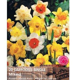 Hollands geteeld Narcis enkel bloemig mix
