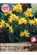 Hollands geteeld Narcis tete á tete mini narcis