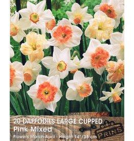 Hollands geteeld Narcis roze trompet mix