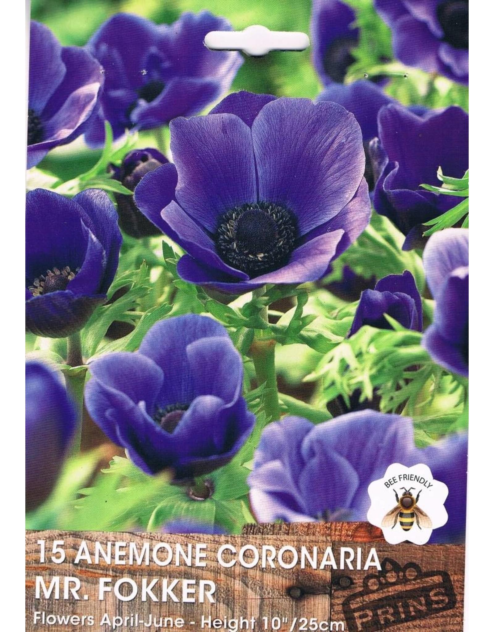 Hollands geteeld Anemone coronaria Mr. GFokker