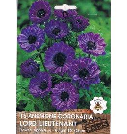 Hollands geteeld Anemone Lord Lieutenant