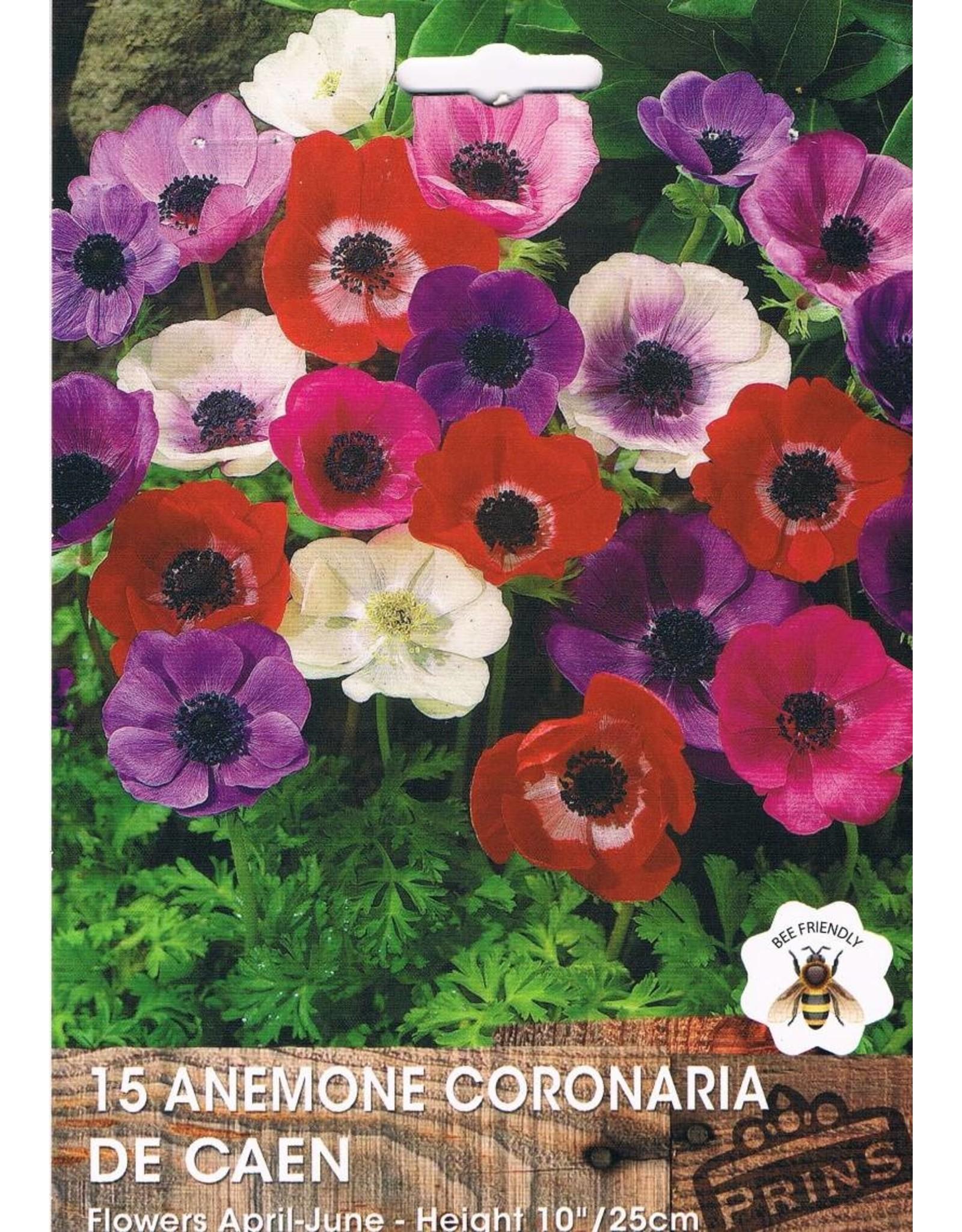 Hollands geteeld Anemone coronaria De Caen