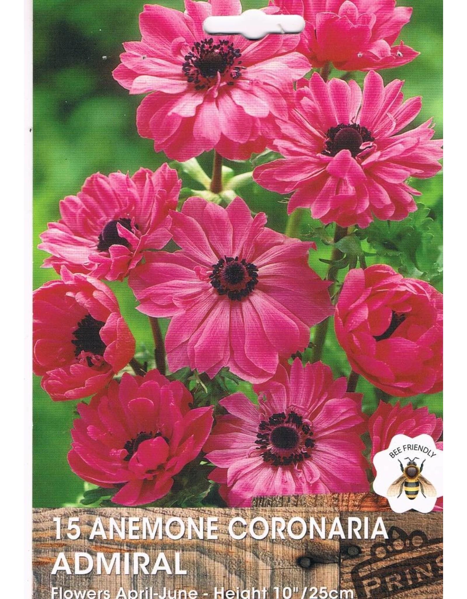 Hollands geteeld Anemione coronaria Admiral