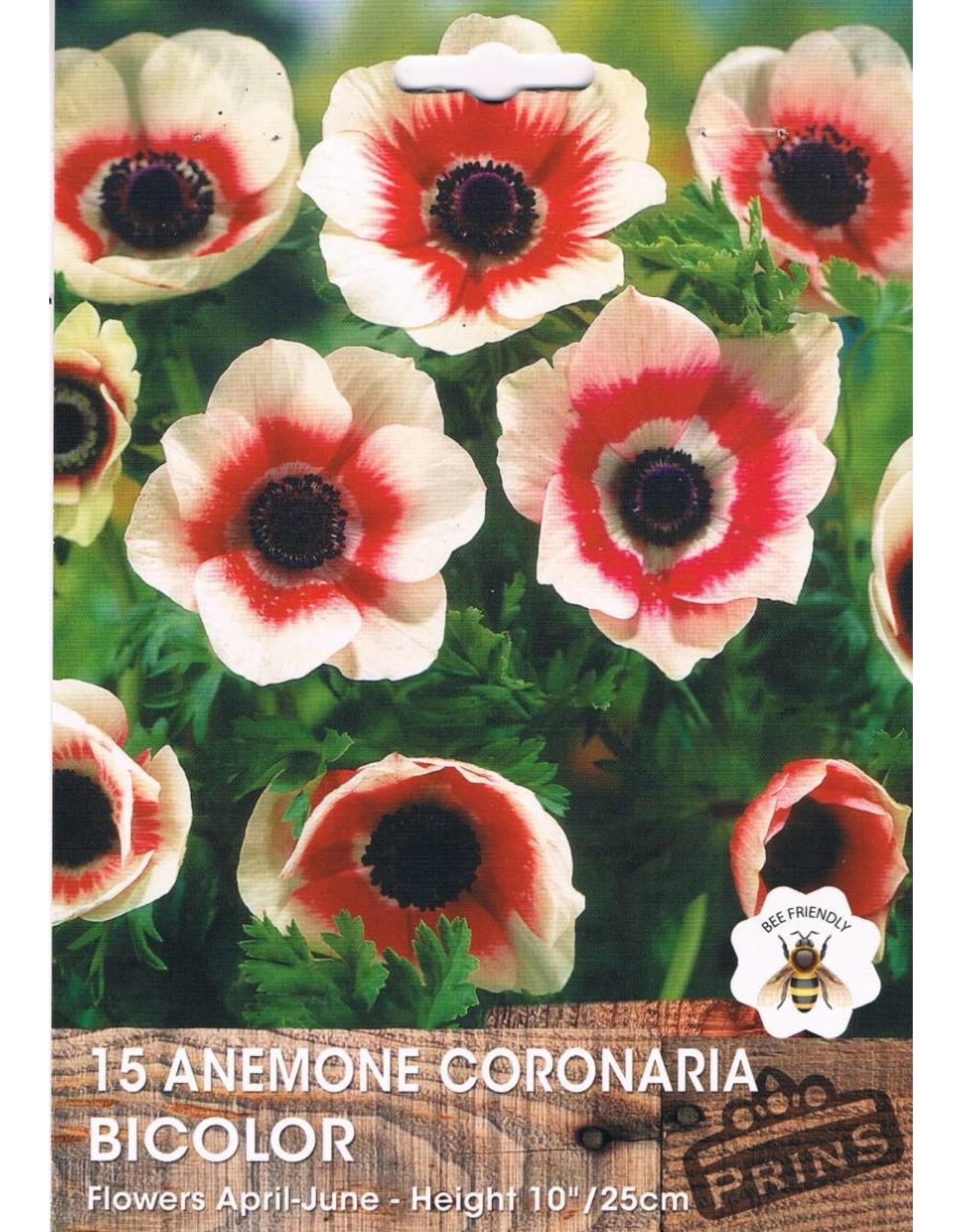 Hollands geteeld Anemone coronaria Bicolor