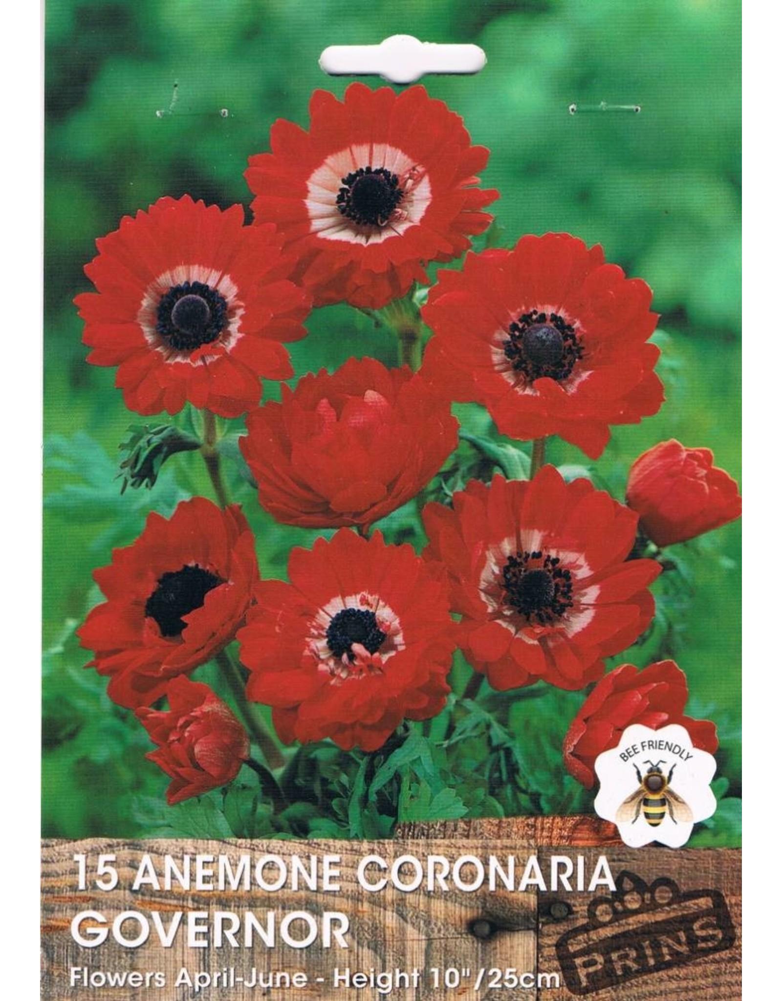 Hollands geteeld Anemone coronaria Governor