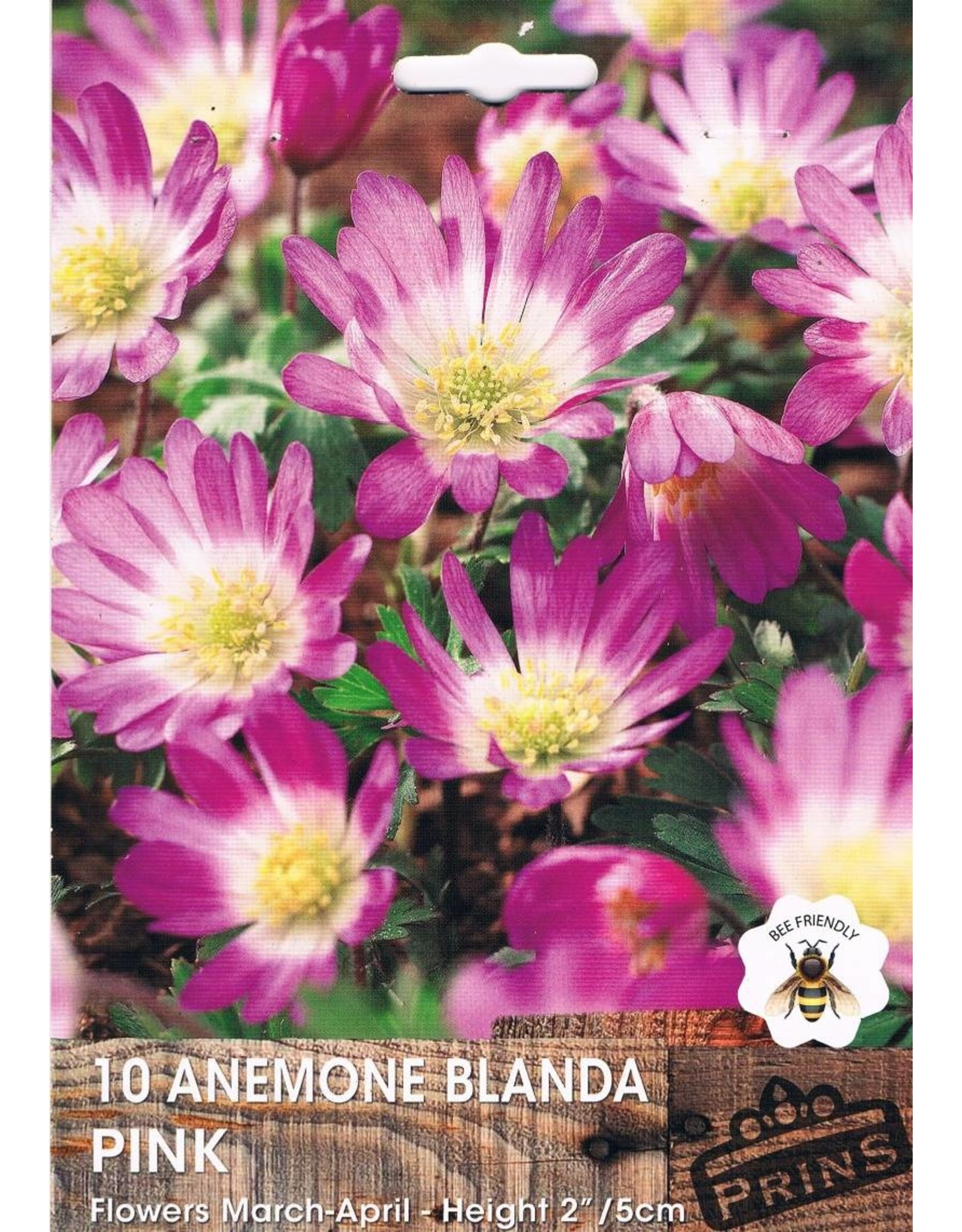 Hollands geteeld Anemone blanda Roze