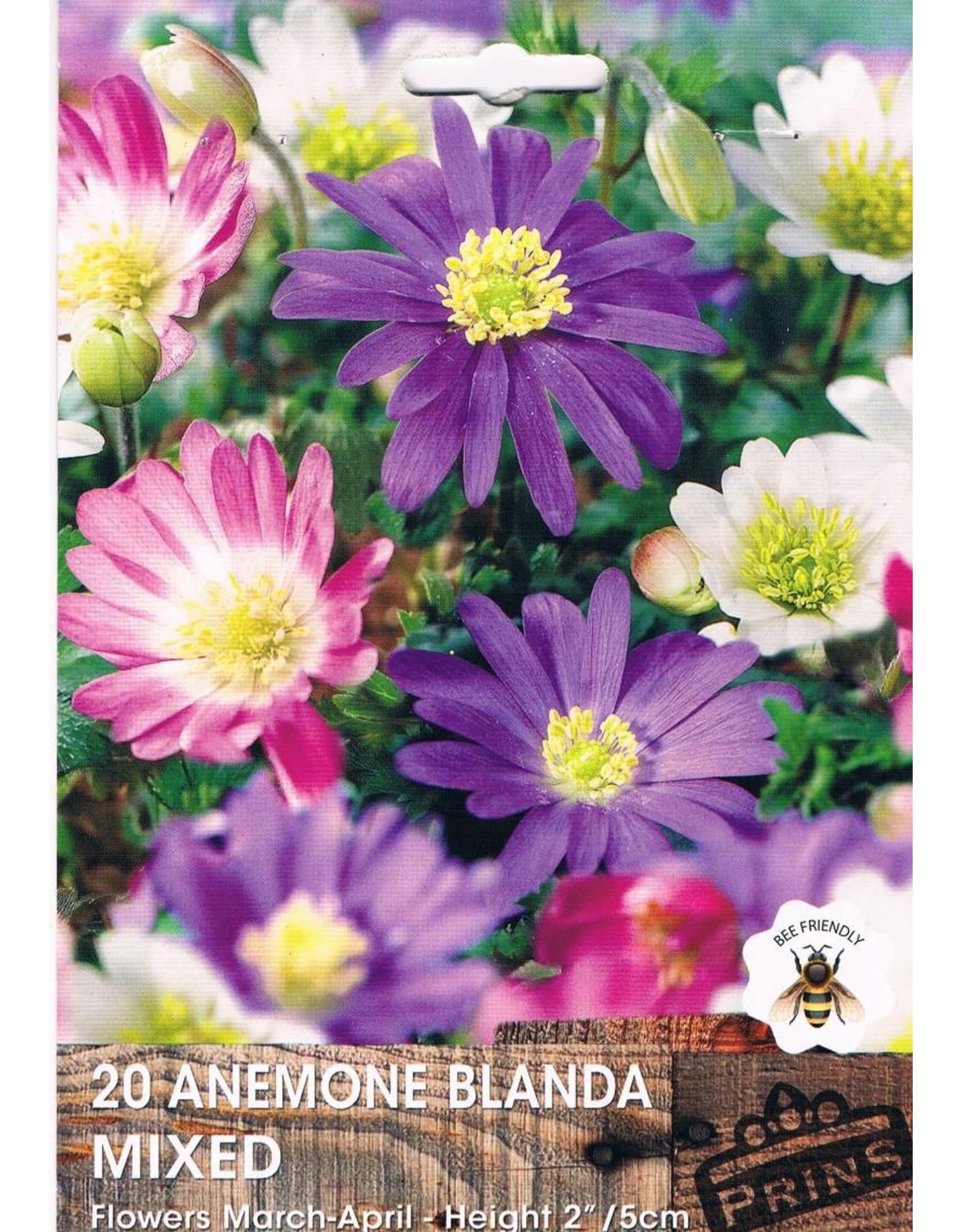 Hollands geteeld Anemone blanda mix