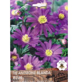 Hollands geteeld Anemone blanda Blauw