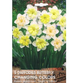 Hollands geteeld Narcis Changing Colors