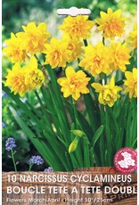 Hollands geteeld Narcis cyclamineus Boucle Tete a Tete