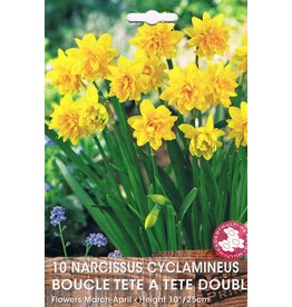 Hollands geteeld Narcis tete á tete dubbel